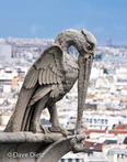Gargoyle on Notre Dame de Paris (Bird)