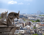 Gargoyles on Notre Dame de Paris (Chimeras)